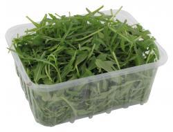 Bio Rucola Salat  (125 g) - 8034105370005