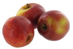 Apfel Roter Boskop