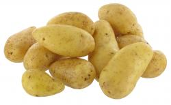 Kartoffel Lilly
