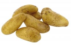 Kartoffel Belana festkochend