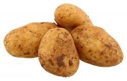 Kartoffeln Annabelle/Princess - festkochend - 2099990025238