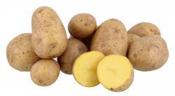 Küstengold Kartoffeln Gala/Soyara