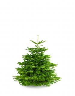 Weihnachtsbaum Nordmanntanne S 100-125cm