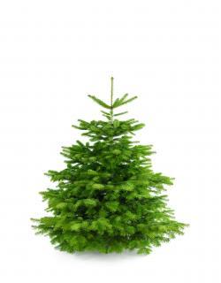Weihnachtsbaum Nordmanntanne M 125-150cm