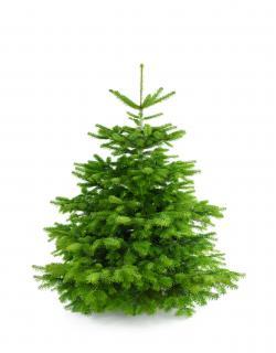 Weihnachtsbaum Nordmanntanne L 150-175cm