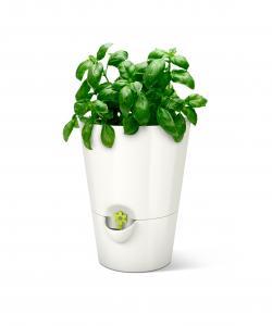 Emsa Fresh Herbs Kräutertopf weiß