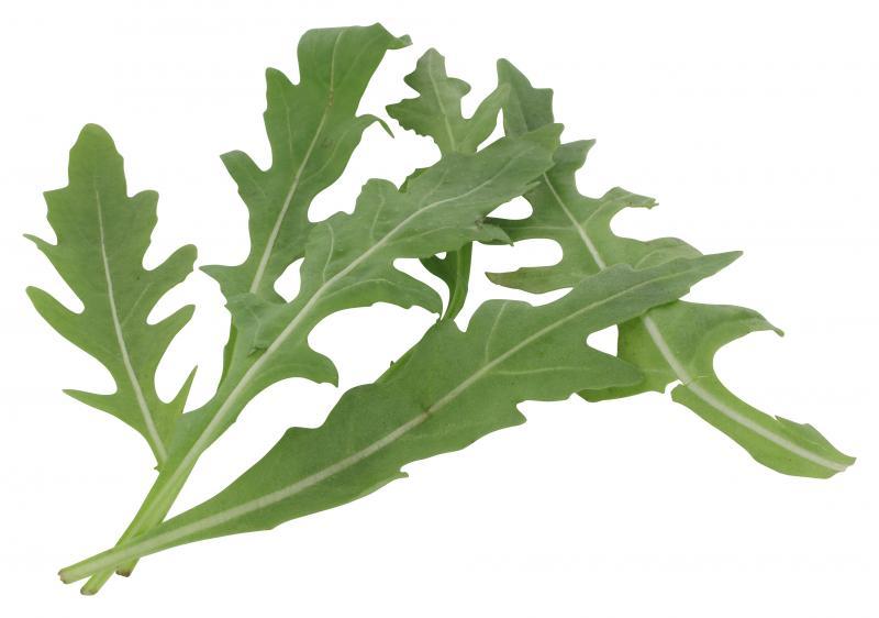 Bio Rucola Salat